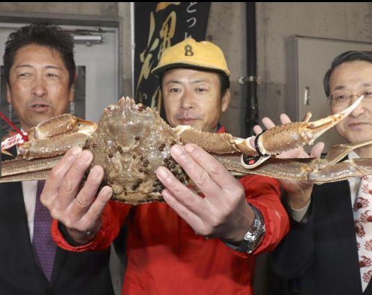 """日本螃蟹拍卖价高达500万 堪称""""螃蟹界的兰博基尼""""-兰博基尼-前程无忧-日本螃蟹-企一网?"""