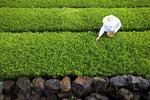 擴充微生物產品,愛茉莉太平洋開設綠茶乳酸菌研究中心-企一網