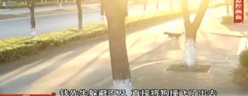 未栓繩的寵物狗與汽車相撞致死,警方判定主人負全部責任