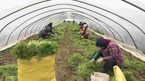 蘇寧官宣助農18條 啟動農產品綠色通道