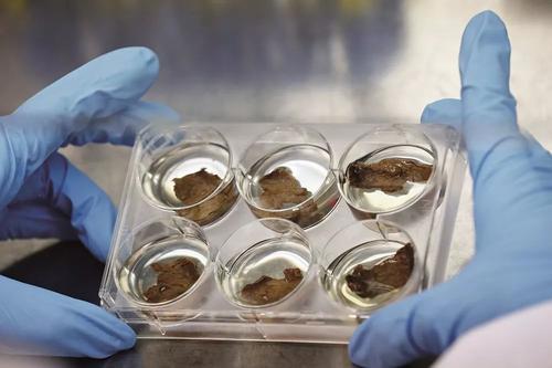 """雙塔食品稱疫情對公司影響不大 """"人造肉""""產品已納入公司發展戰略"""