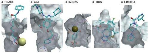 捷思英達:雙輪驅動模式搭建抗癌新藥管線,國際首創新藥即將進入1b/2a臨床試驗