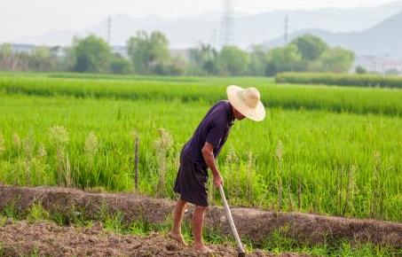 建議建立農民退休制度