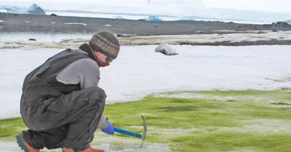 南極洲出現綠雪