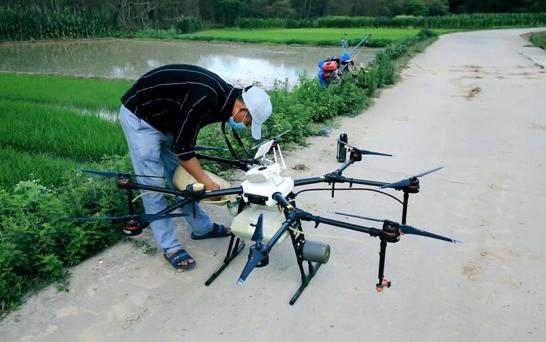 湖南村庄遭遇蝗灾,相关部门做出应对措施