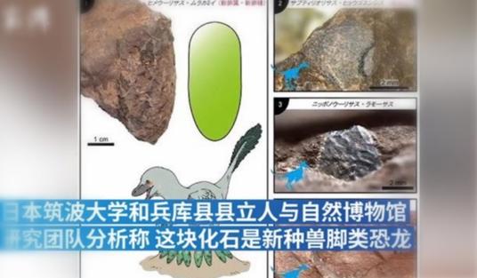 日本发现最小恐龙蛋化石,重10g左右,大小堪比鹌鹑蛋