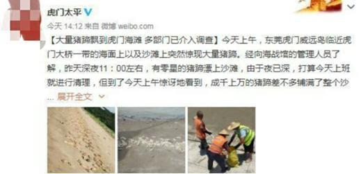 海滩出现大量猪蹄,来源未知,画面惊呆众人