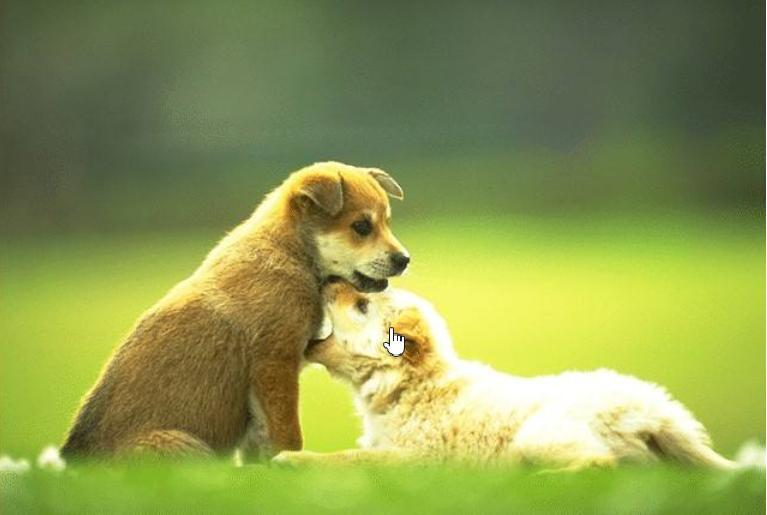 人狗年龄对应公式新鲜出炉,你家狗狗几岁了